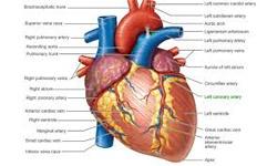 قلب ضعیف